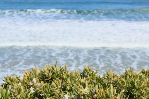 Beach Vegetation